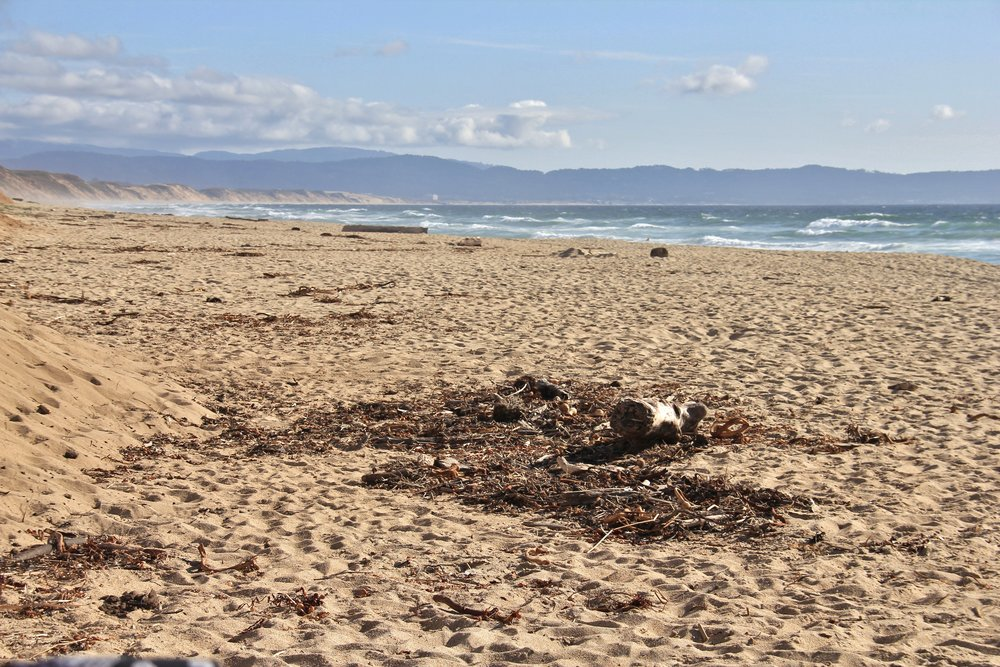 Katzman Beach Day 117.JPG