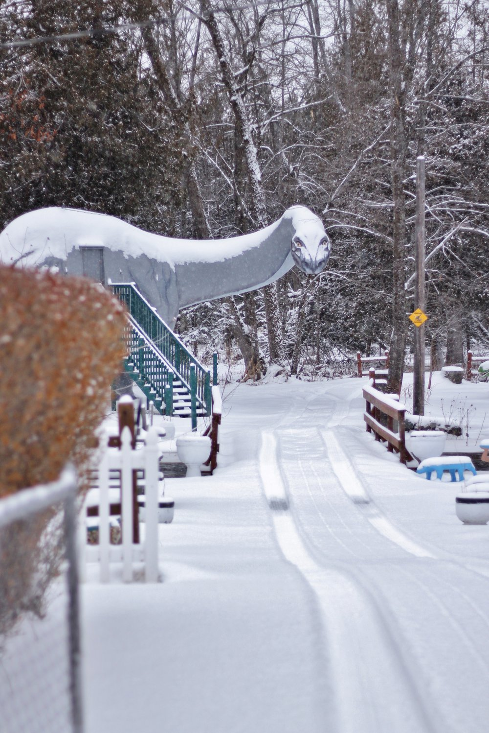 Dinosaur Gardens in the Snow (1).jpg