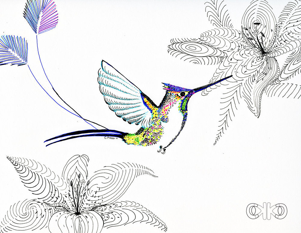 hummingbirdtail11.jpg