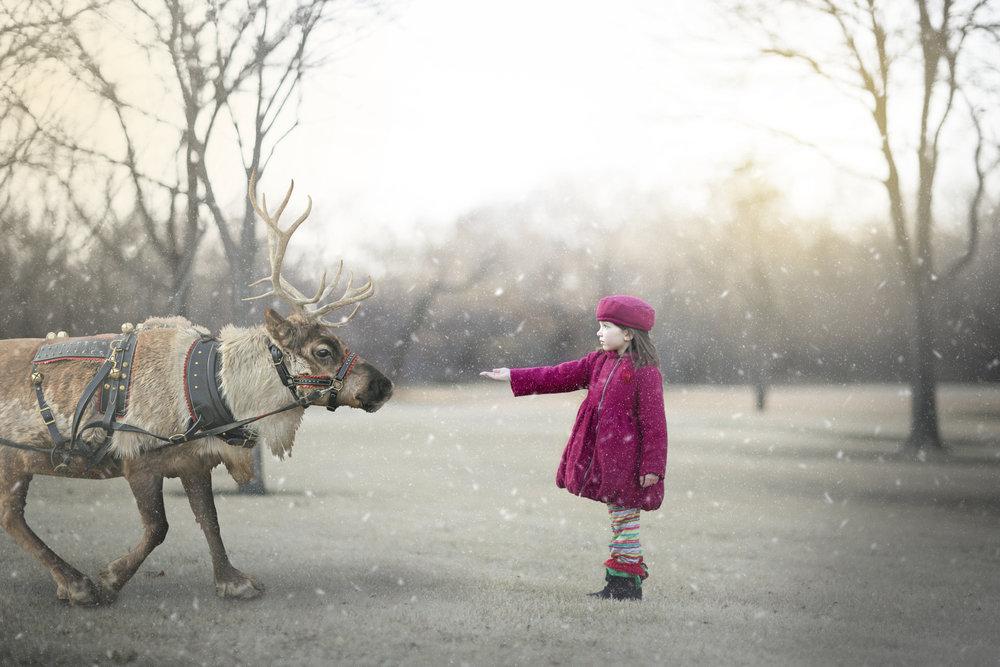 Reindeer 12202017 (1).jpg