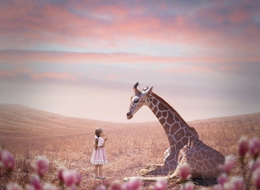 lily giraffee.jpg