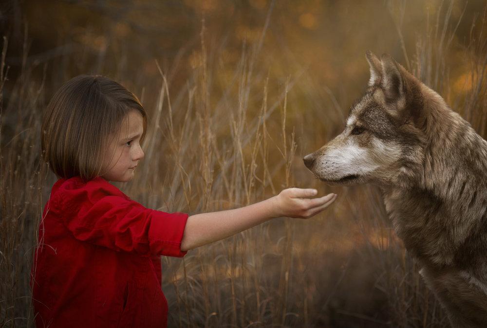 Wolf pics (2) copy.jpg
