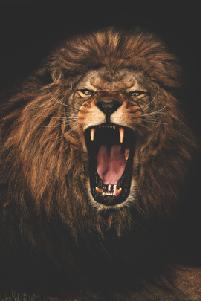 lionpic.png