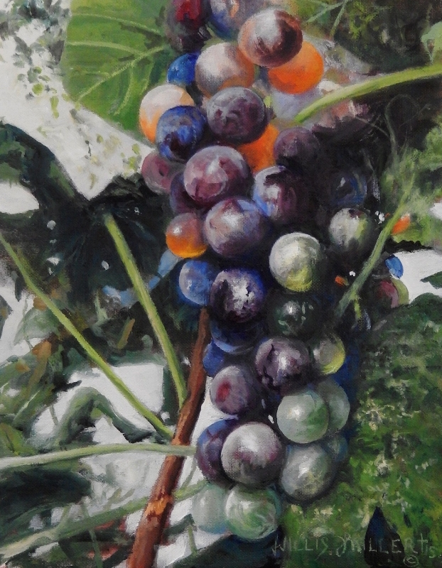 "Bear Much Fruit, 14"" x 11"", oil.  A friend gave us a graph vine. The grapes would start out green and then change color as they ripened."