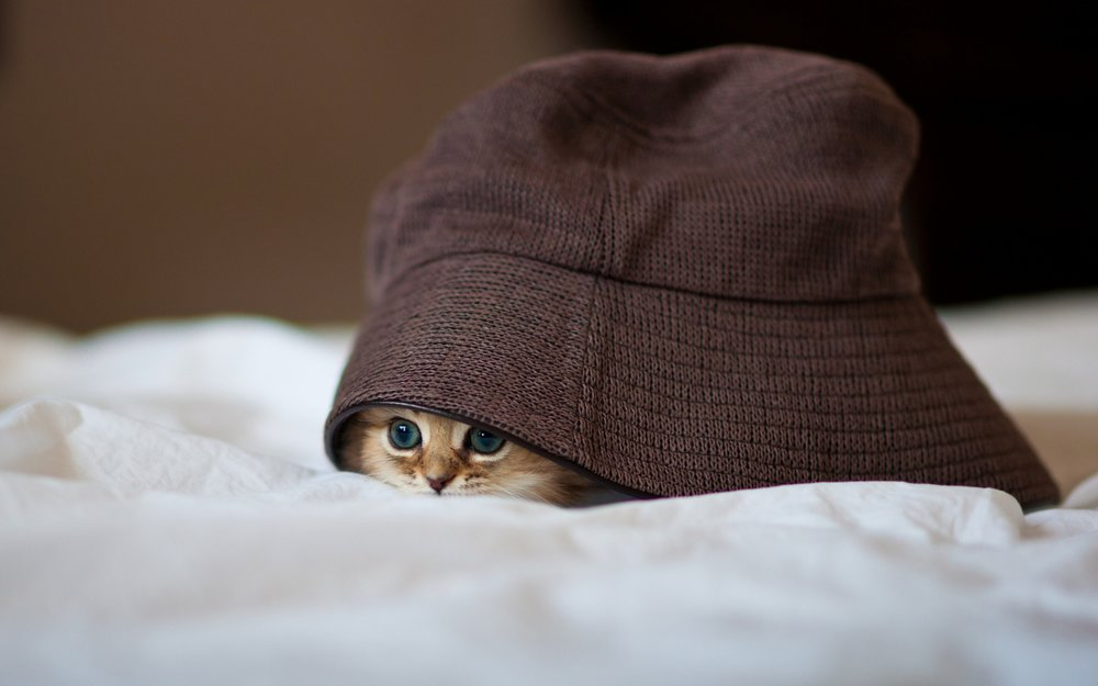 Kitty-hiding-place-1920x1200.jpg