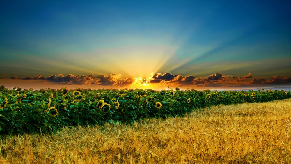 free-beautiful-landscape-desktop-wallpaper-06-2010_1920x1080_81785.jpg
