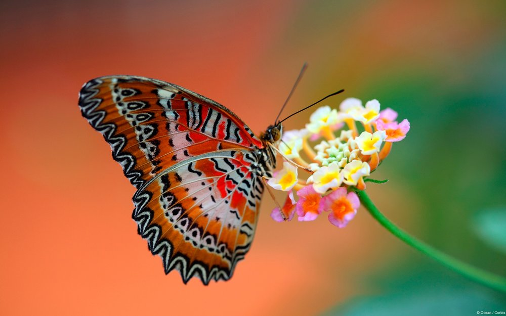 butterfly_on_flower-1920x1200.jpg