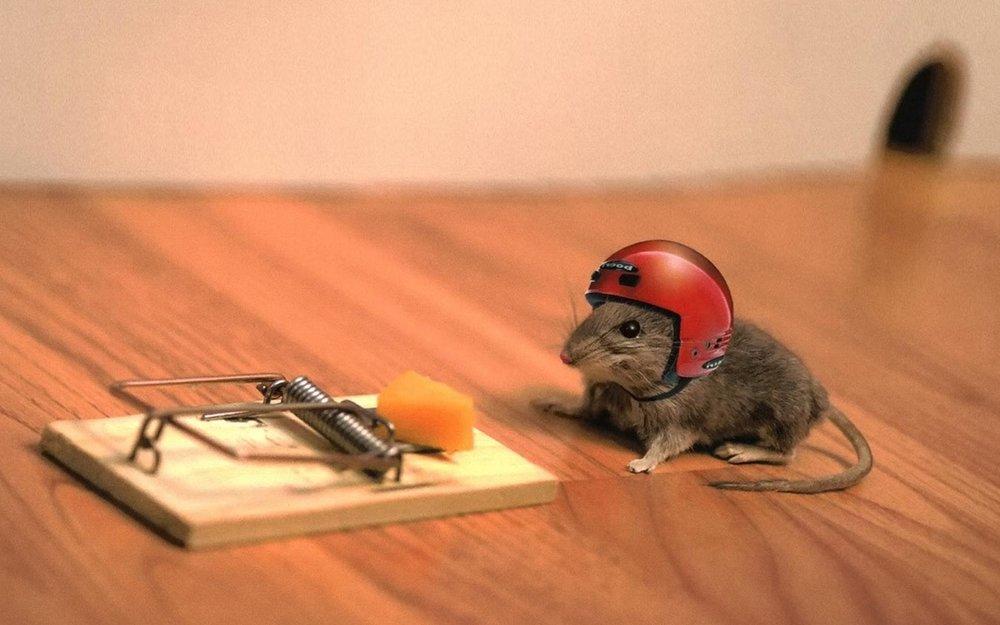mouse-risk.jpg