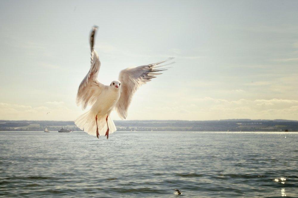 gull-192909_1280.jpg