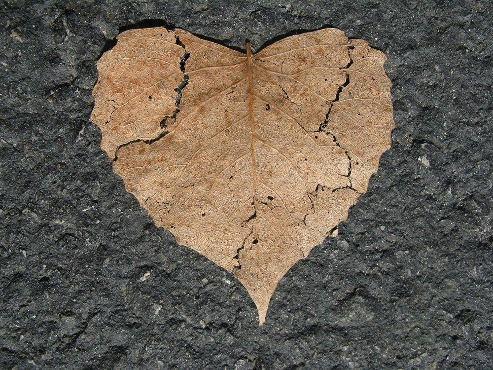 heart-742712_1920.jpg