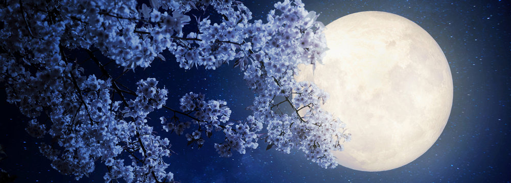 May_Flower_Moon_header.jpg