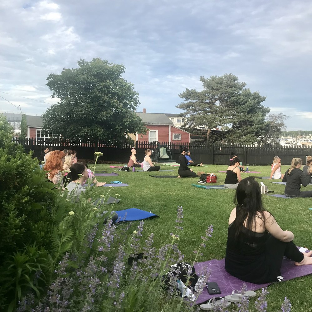 Lavender surrounding the yoga lawn.