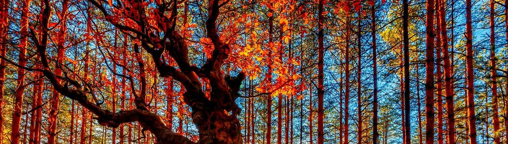 Mother Nature in Autumn