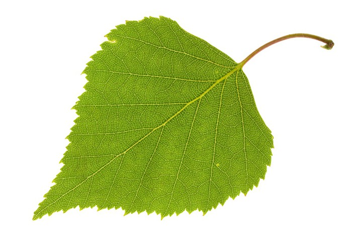 green_insulation.jpg