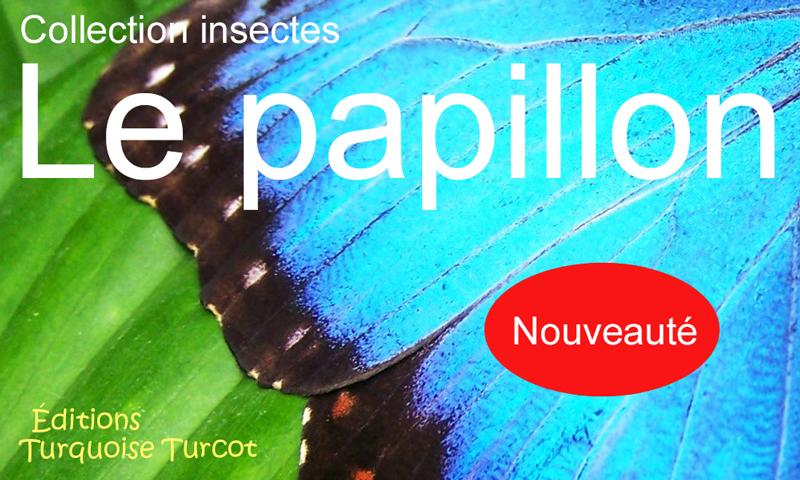 montage_1_turquoise_le_papillon.jpg