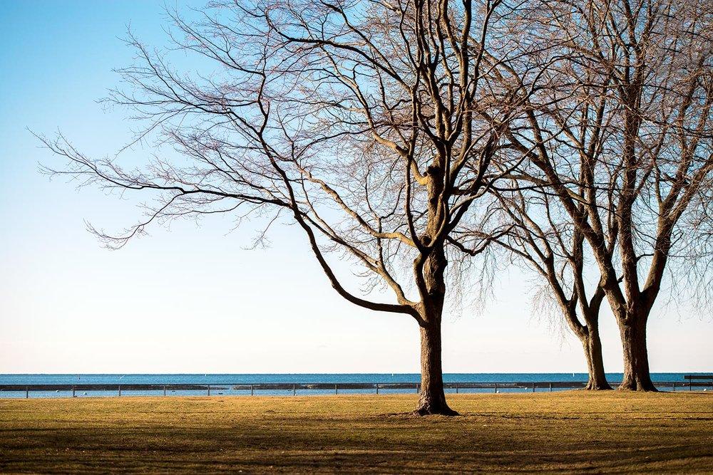 tree775.jpg
