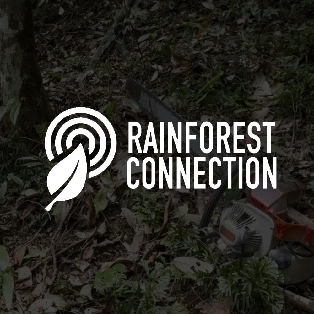 WorkPageSquare_Rainforest_Connectin.png