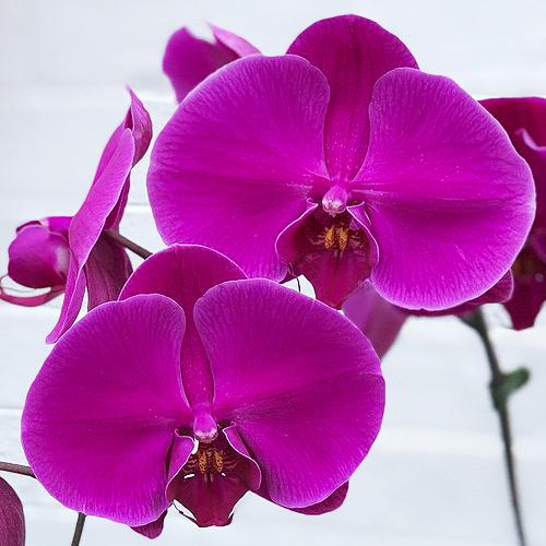 Dark solid purple.jpg