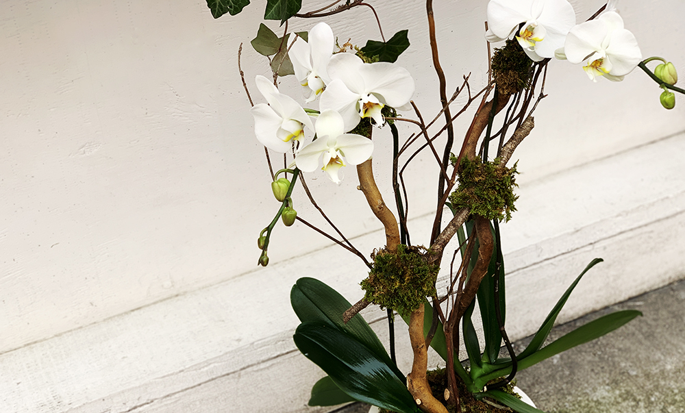 get a new arrangement every week/month - We find that some of our clients, like us here at Orchid Man, love to be surrounded by fresh orchids 24/7. To share the beauty, we provide residential and corporate subscription services. You will not be charged for a new vase each time the arrangements are refreshed, resulting in a discounted price. Just leave your old arrangements ready for us to pick up at your lobby/messenger center.