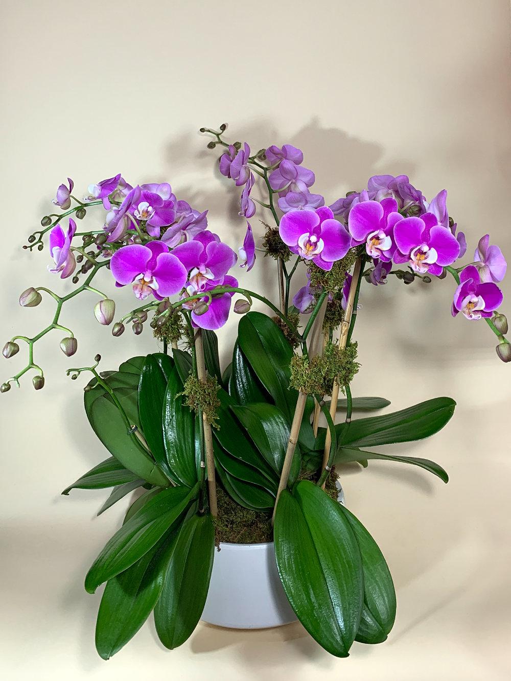 Multiple Lavender in White Contour
