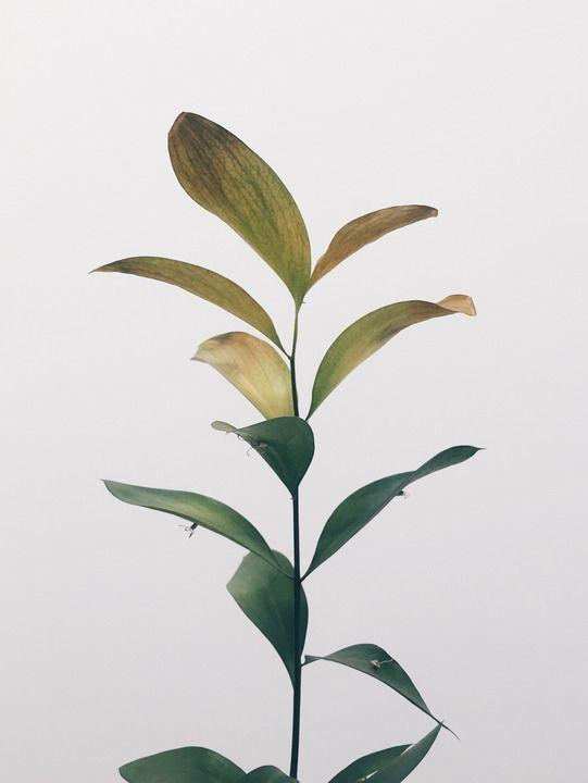 Lobby_plant.jpg