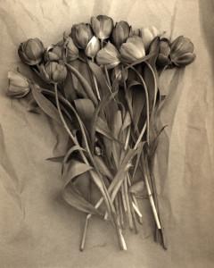 tulips-240x300.jpg