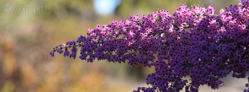 arboretum_flower.jpg