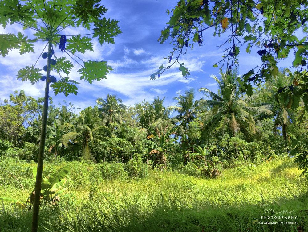 Jungle trek on Siladen