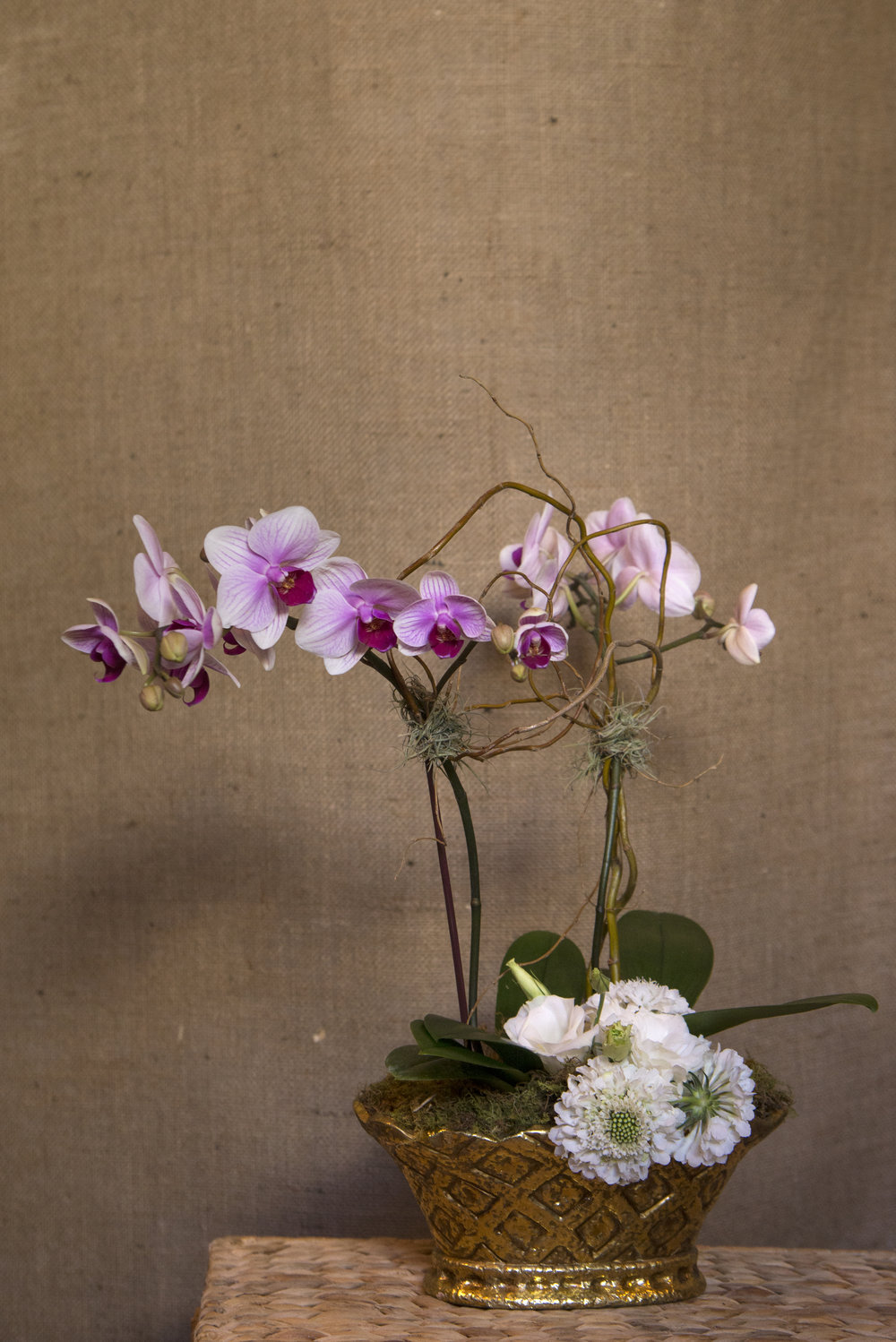 small orchid.jpg