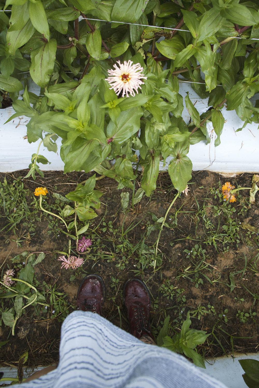 cactus zinnia covey rise farm.jpg