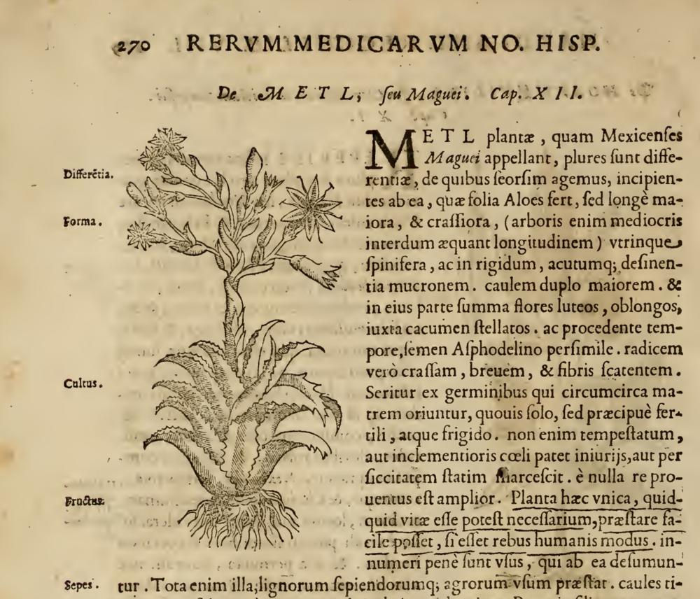 Maguey en  Rerum medicarum Novae Hispaniae thesaurus: Plantarum, Animalium, Mineraluim Mexicanorum . Francisco Hernández Toledo, 1628. Roma.