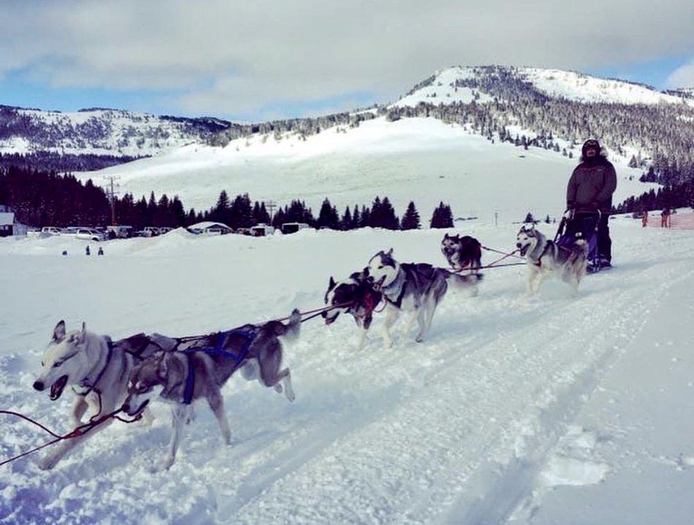 sled-dogs.jpg