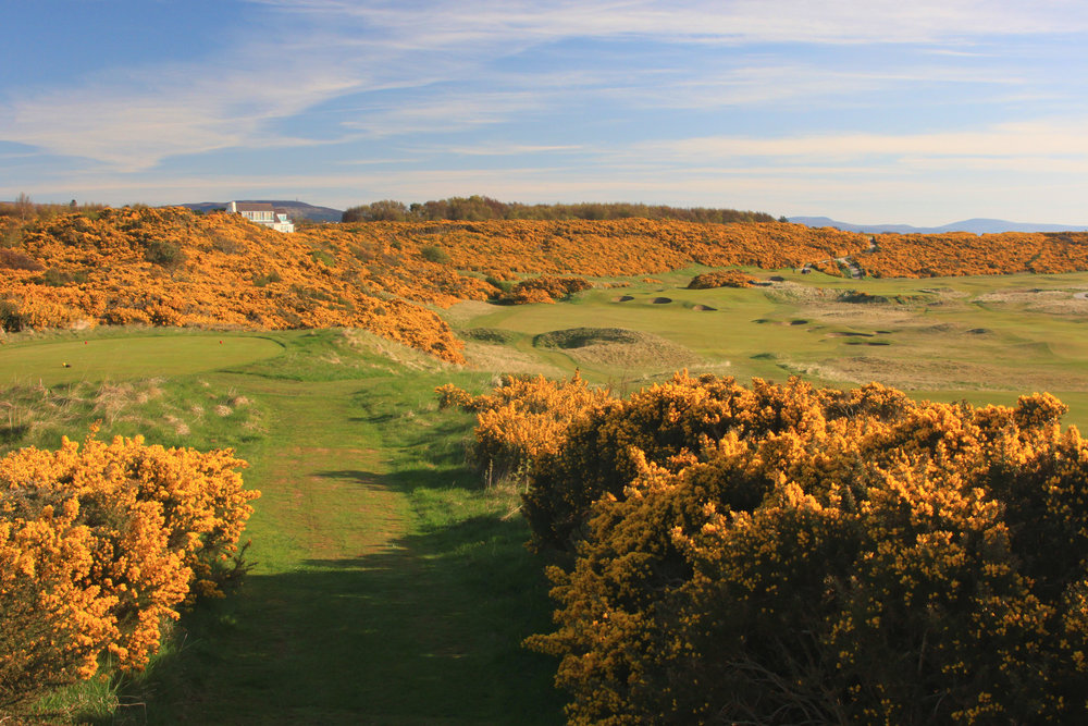 Integrative Golf Co. - Dornoch.JPG