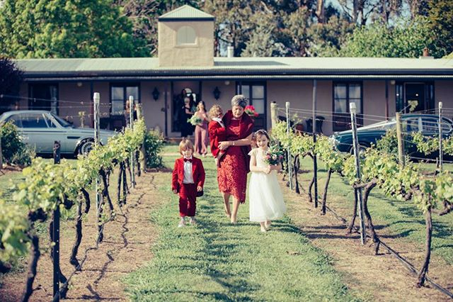 An aisle of vines.  Vineyard perfect bridal walk.  #oakleighvignetoweddings #bathurstnsw