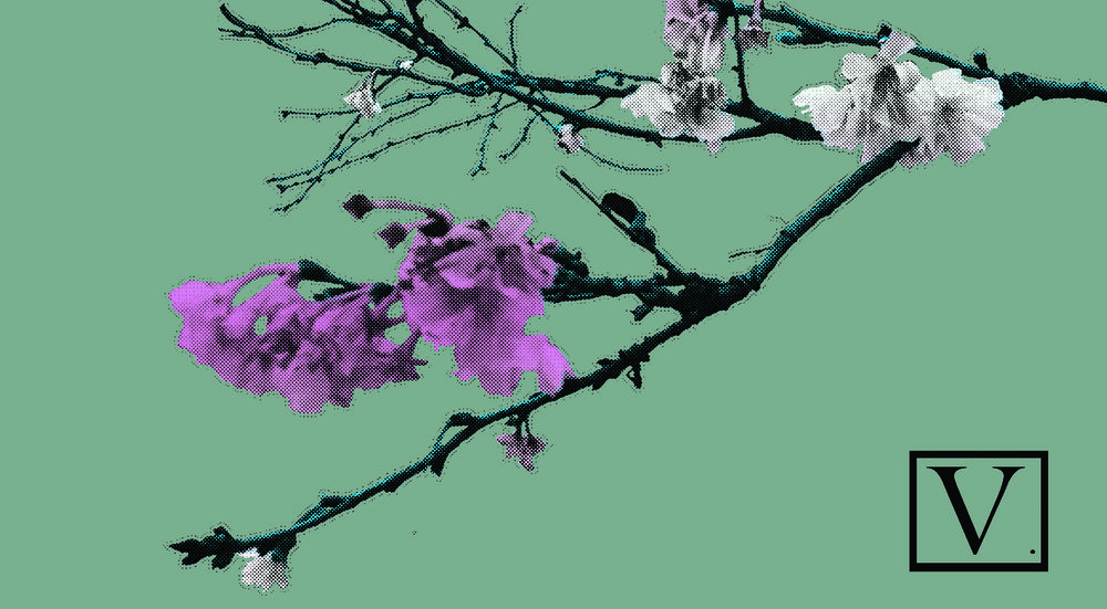 """Cherry Blossom Pink & White, 15 edition + 2 Artist Proof,inkjet print on archival paper 290g/sm, 20"""" X 37"""", 2018"""
