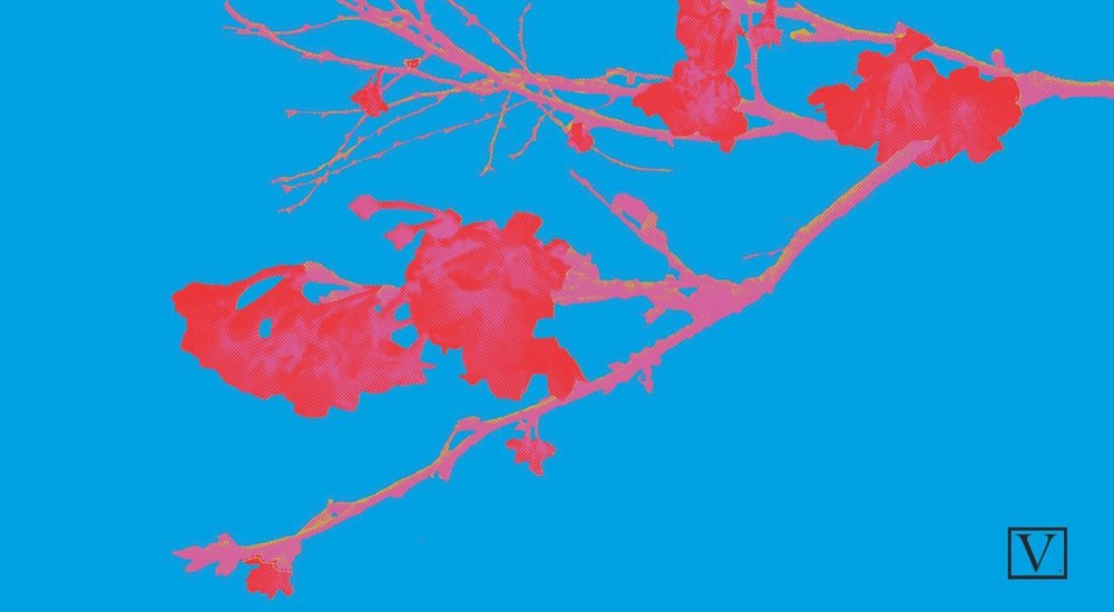 """Cherry Blossom Blue & Red, 15 edition + 2 Artist Proof,inkjet print on archival paper 290g/sm, 20"""" X 37"""", 2018"""