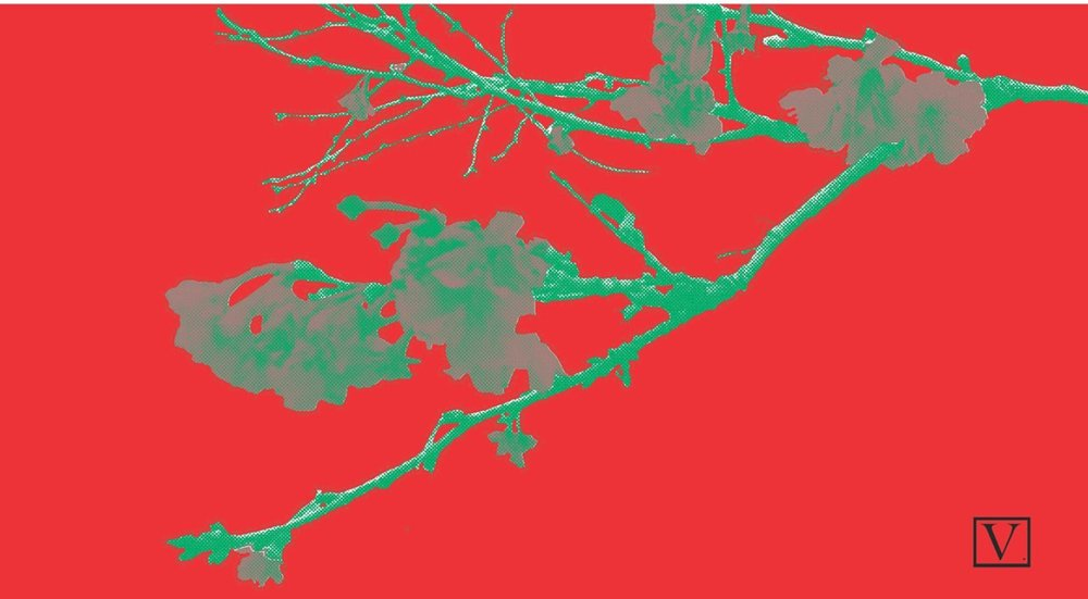 """Cherry Blossom Red & Green, 15 edition + 2 Artist Proof,inkjet print on archival paper 290g/sm, 20"""" X 37"""", 2018"""