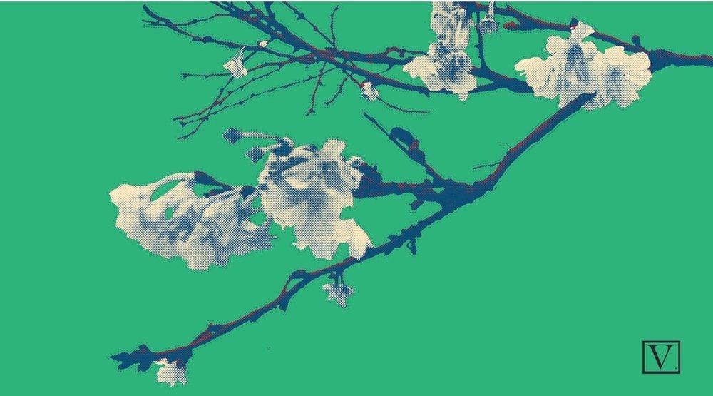 "Cherry Blossom Green & White, 15 edition + 2 Artist Proof,inkjet print on archival paper 290g/sm, 20"" X 37"", 2018"