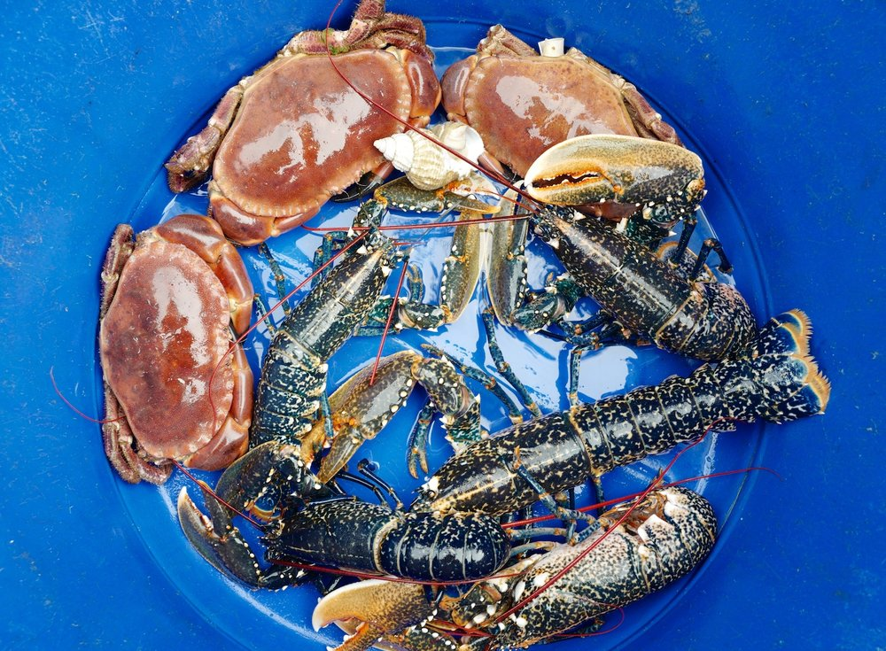 Cornish brown crabs