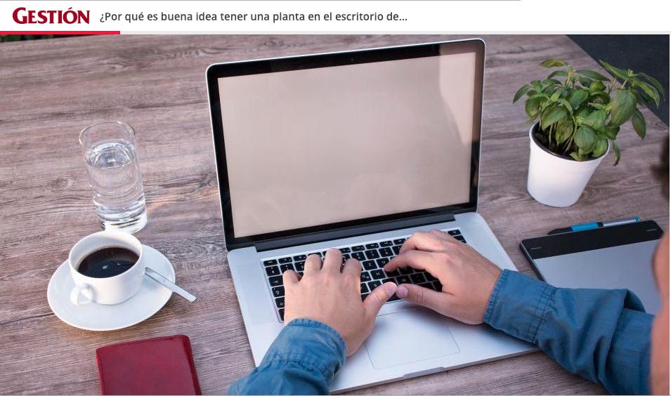 Tener una planta en casa u oficina trae muchos beneficios. Uno de los principales es que funcionan como purificadoras del aire. (Foto: Pixabay)
