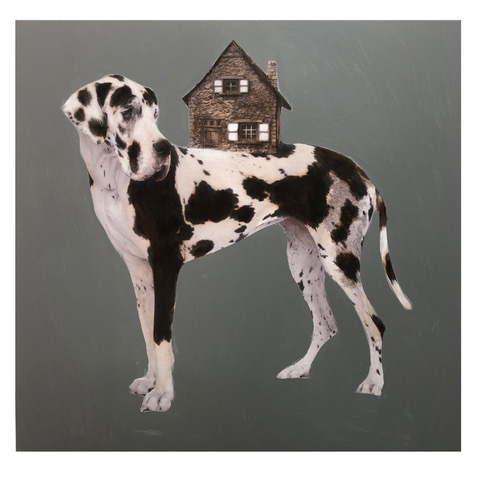 Dog House 60 x 60.jpeg