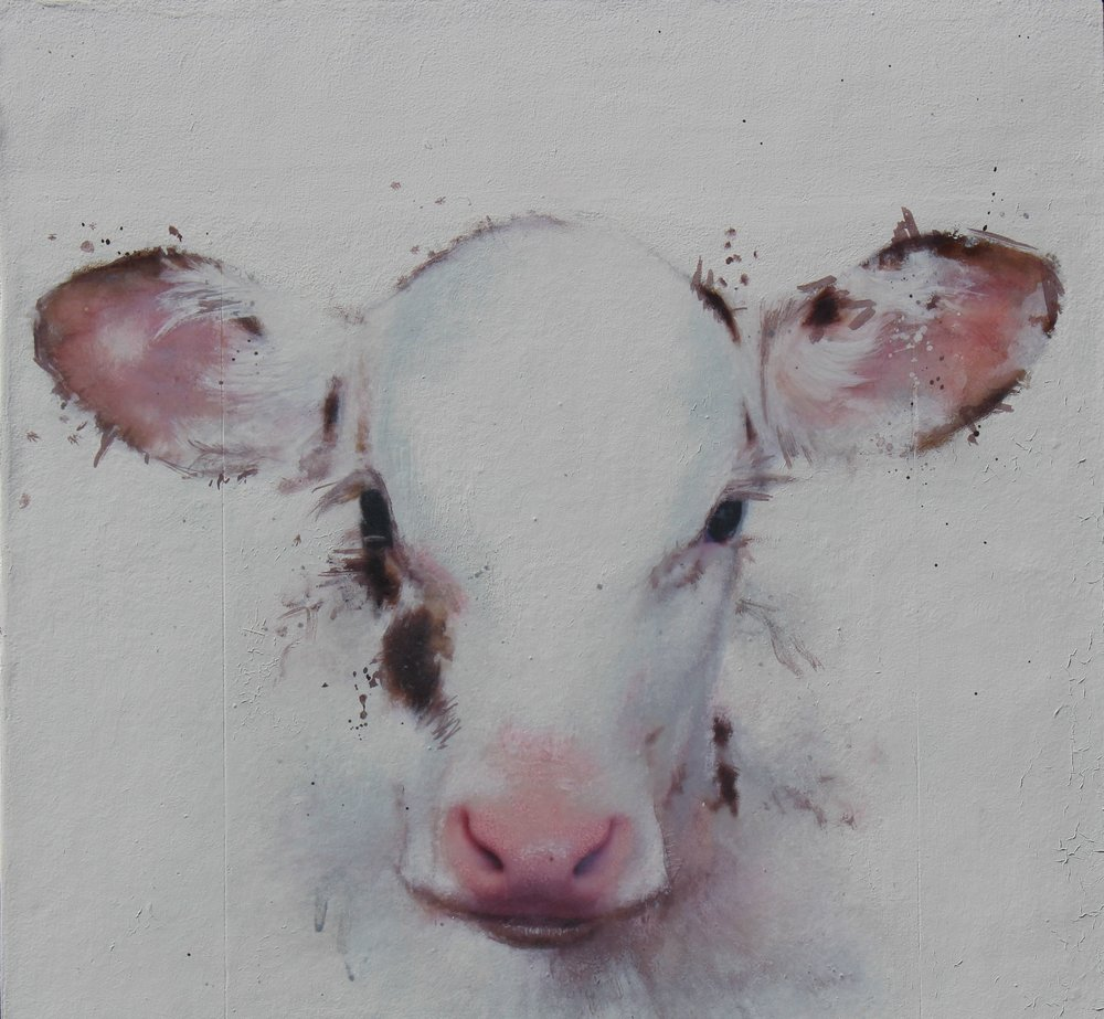 White Calf Study