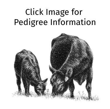 Mogck Erica 1501 + Bull Calf