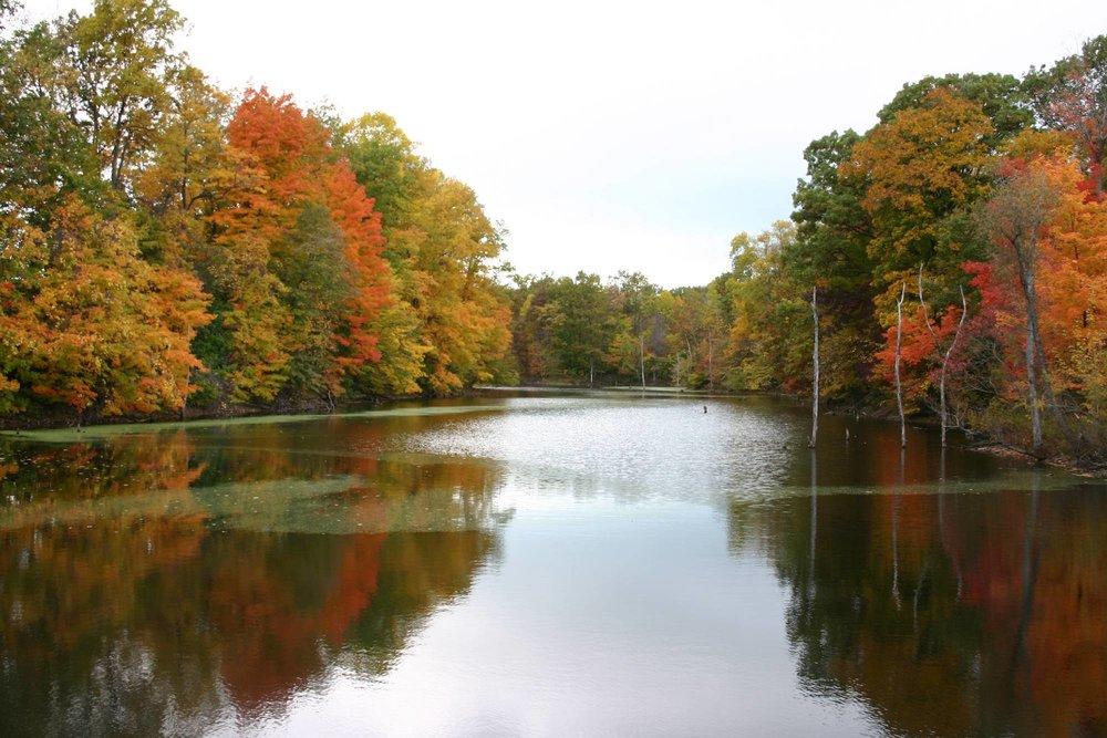 chikaming_wooded_pond.jpg