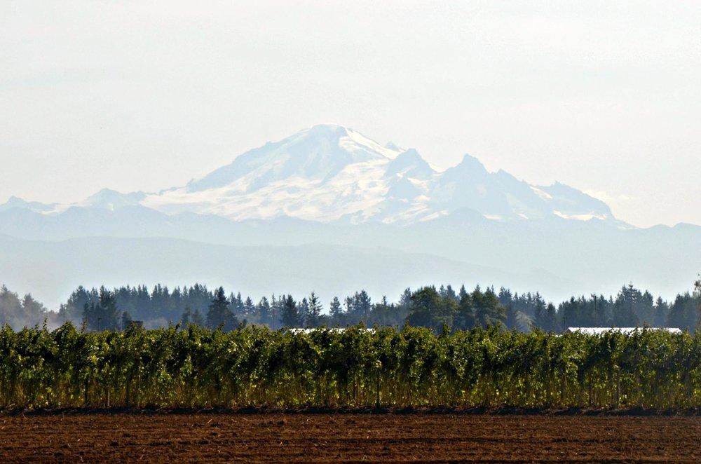 Mt Baker 3.jpg