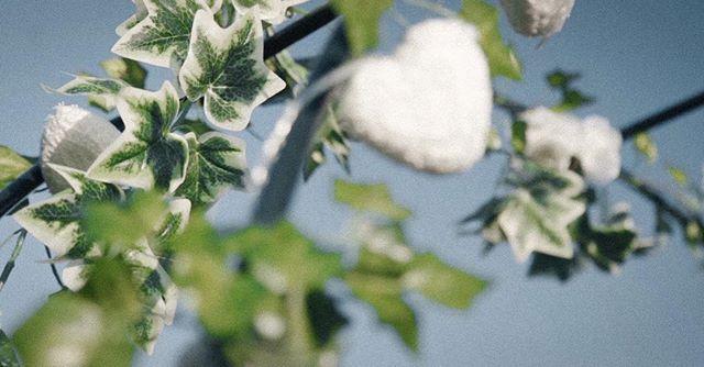 💍💐 | . . Gaan jullie binnenkort trouwen? Kijk dan op www.twodayfilms.nl voor alle trouwfilm mogelijkheden. . . . . . #weddingfilms #twoday #trouwen #wedding #love #marriage #married