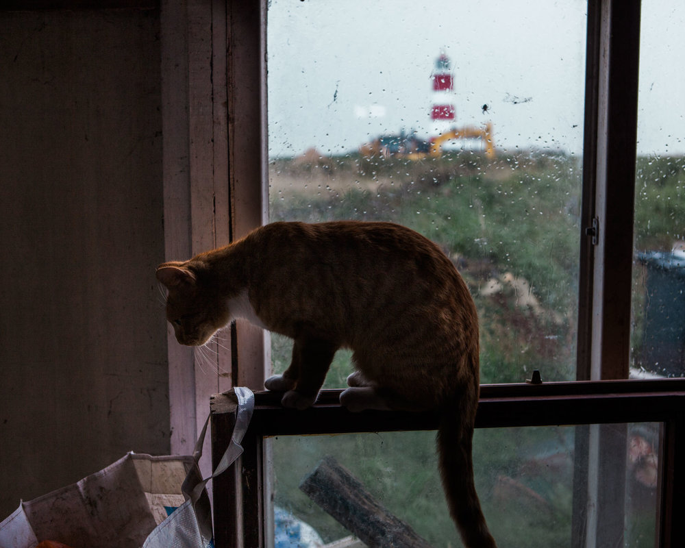 ryony's cat shelters from the pouring rain. An increase in tidal surges has meant that the cliff edge is now creeping towards the house at a faster rate than expected.