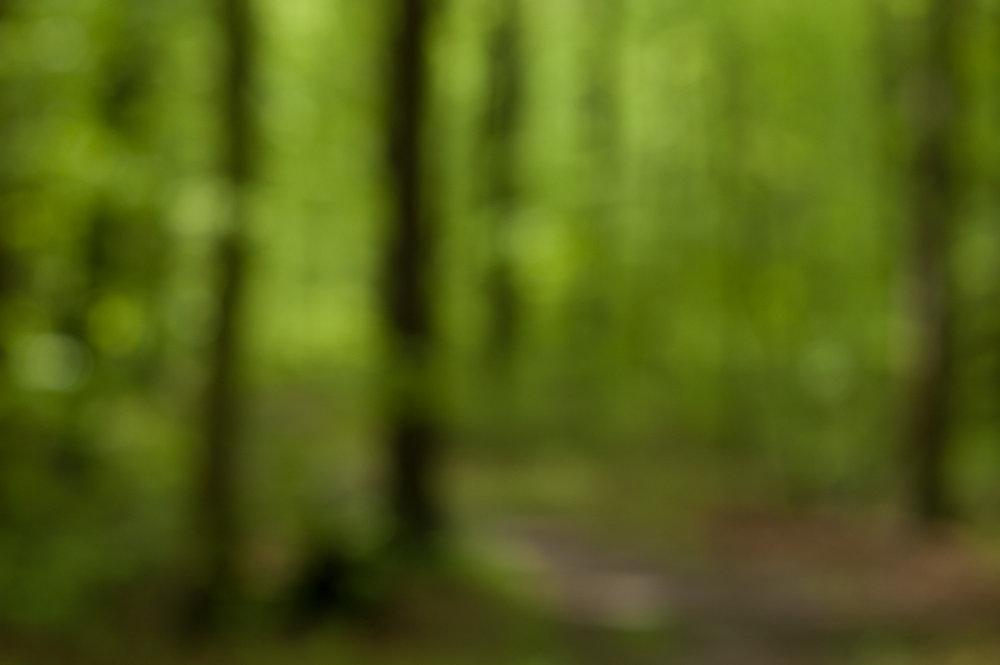 woods walk-36153.jpg