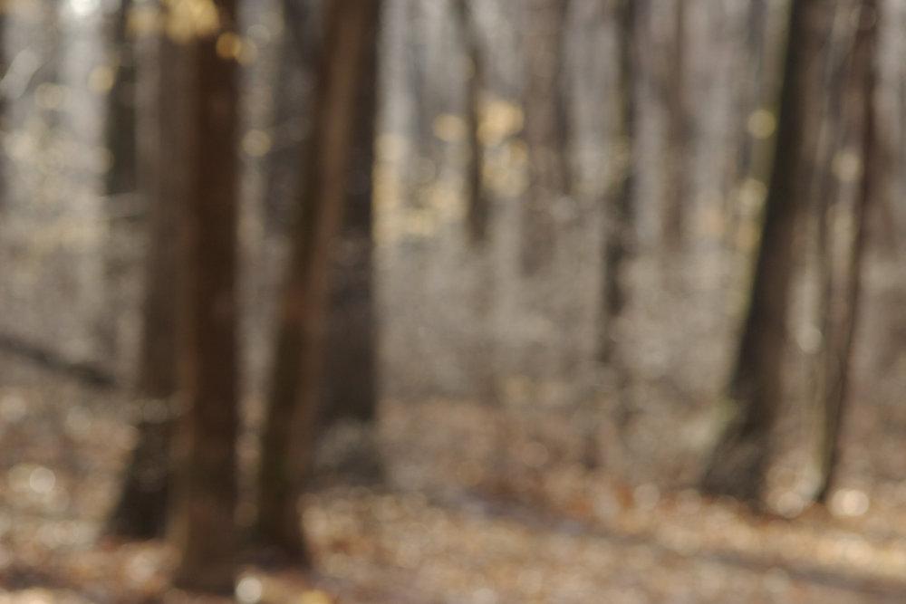 woods walk-.jpg