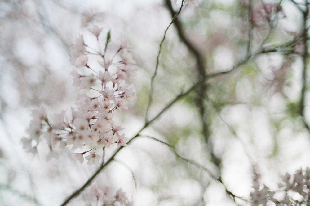 blur-3472.jpg